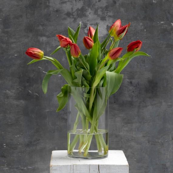 Tulipanes rojos  - 1