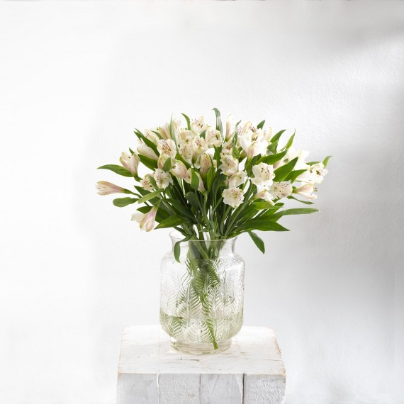 Flor Astromeria blanca