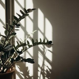 Zamioculca, la planta resistente y fácil de cuidar