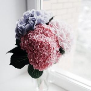 Hortensia, la flor reina del verano