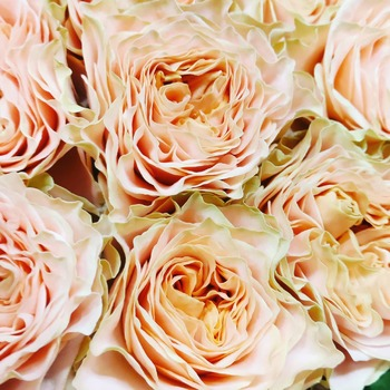 Las rosas de jardín tienen un aire tan romántico ❤️ #flores🌸 #floresonline #ramosdeflores #floresadomicilio #cocoandmiaflores